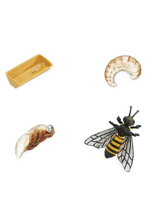 El ciclo de vida de una abeja