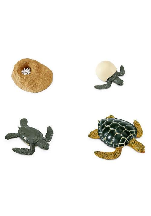 El ciclo de vida de una tortuga
